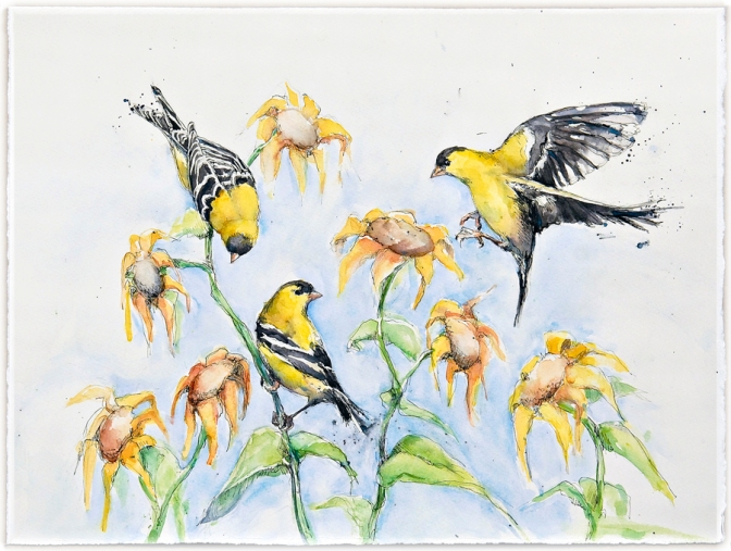 AJJ gold finch a cards 0146